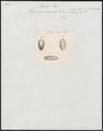 Dipsas carinata - kop - 1837 - Print - Iconographia Zoologica - Special Collections University of Amsterdam - UBA01 IZ12000005.tif