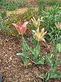 Dixon Gardens Memphis TN 2014-04-06 099.jpg