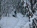 Dmitrovsky District, Moscow Oblast, Russia - panoramio (122).jpg