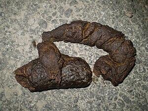 Dog feces
