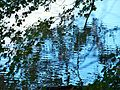 Donau-Nebenarm 31.JPG
