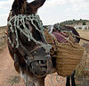 Donkey panniers.jpg