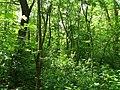 Dovhorakivskyi Botanical Reserve (2019.05.26) 01.jpg