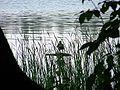 Drawienski Park Narodowy - ptactwo wodne.jpg