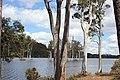 Drowning Gumtrees - panoramio.jpg