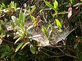 Dscn0253 japan nature.jpg