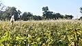 Dugariya, Madhya Pradesh 471101, India - panoramio (50).jpg
