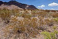 East bajada of Bennett Mountain - Flickr - aspidoscelis.jpg