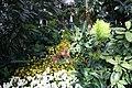 Easter flowers in Talvipuutarha IM5508 C.JPG