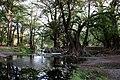 El Sabinal, Aguascalientes (20471946664).jpg