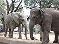 Elefantes - panoramio.jpg