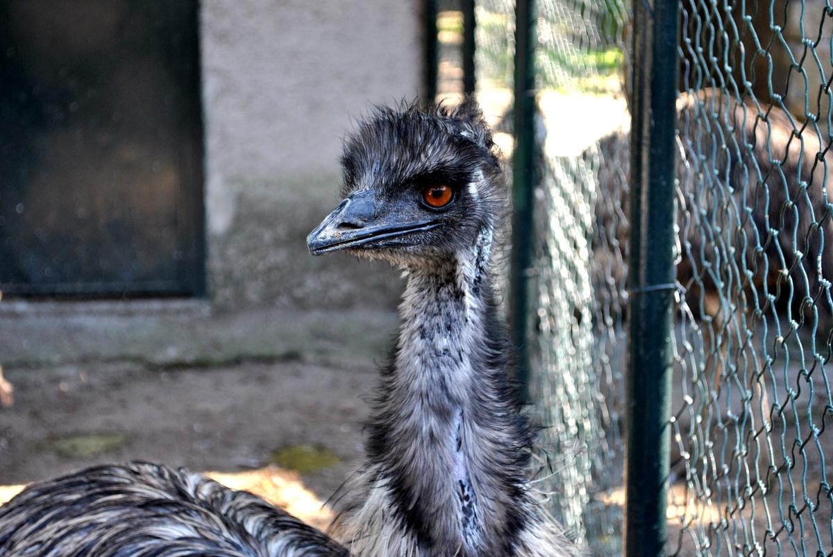 Zoo Di Napoli Wikiquote