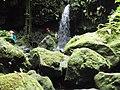 Emerald Pool, Dominica,2.jpg