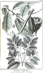 Encyclopedie volume 5-159.png