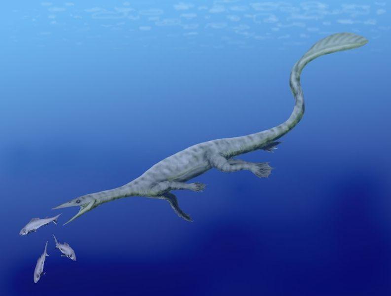 http://upload.wikimedia.org/wikipedia/commons/thumb/4/45/Endennasaurus_BW.jpg/793px-Endennasaurus_BW.jpg