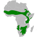 Eremopterix leucotis distribution map.png
