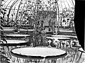 ErfgoedLeiden LEI001014796 Kas met Victoria Regia in de Hortus Botanicus.jpeg