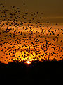 Etosha sunset.jpg