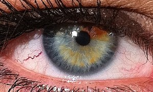 Eye Color Wikipedia - 24 beautiful animals with different coloured eyes