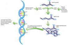 The nutriepigenetic pathway of maternal choline-deficient diets helps to elucidate the development of fetal alcohol syndrome. Pregnant rodents fed diets low in choline were found to give rise to offspring with diminished neurological capacity. This is similar to pregnant rodents whom were fed ethanol and were found to have alterations in the metabolism of 1-carbon compounds. This leads to diminished levels of methyl donors available for methylating DNA; thus allowing for overexpression of normally silenced genes causing neurological defects in their offspring.