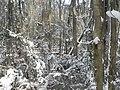 FL Swamp in Snow (5304211620).jpg