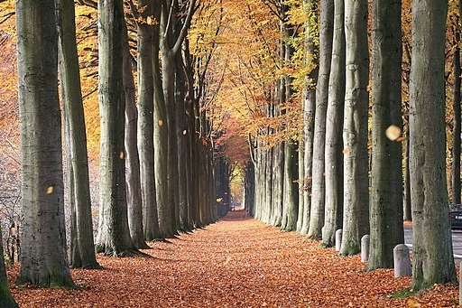 Dreaming Big for the Last Quarter of 2012: Fagus sylvatica By Jean-Pol GRANDMONT