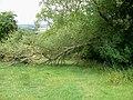 Fallen tree - geograph.org.uk - 1988196.jpg