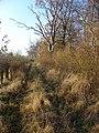 Farm Track - geograph.org.uk - 82119.jpg