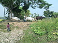 Farmer with cows 2.jpg