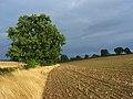 Farmland, Welford - geograph.org.uk - 925043.jpg