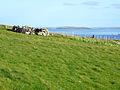 Farmland near Houlland - geograph.org.uk - 1310694.jpg