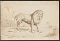 Felis leo - 1869 - Print - Iconographia Zoologica - Special Collections University of Amsterdam - UBA01 IZ22100047.tif