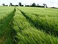 Field near EMA - geograph.org.uk - 1343947.jpg