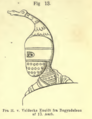 Fig 13 Aarbog for Nordisk Oldkyndighed og Historie 1867.png