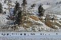 File-Bison in Little America Flats;-Jim Peaco;-December 2013;-Catalog 19229d;-Original IMG 1270 (d746ca49-e3a0-4f5a-a986-43d7b18381c4).jpg