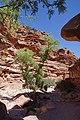First Cottonwood, Hualapai Canyon, approaching The Ladder - panoramio.jpg