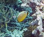 Fish 11 (22818454928).jpg