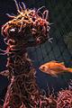 Fish by Tower of Starfish (16947057914).jpg