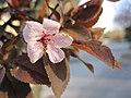 Fleur du Mal 02.jpg