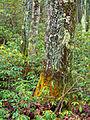 Flickr - Nicholas T - Temperate Jungle.jpg