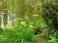 Flickr - brewbooks - Iris at Ayrlies.jpg