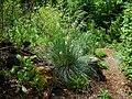 Flickr - brewbooks - John M's Garden (20).jpg