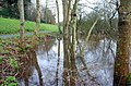 Flooding, Quoile Pondage (3) - geograph.org.uk - 665823.jpg