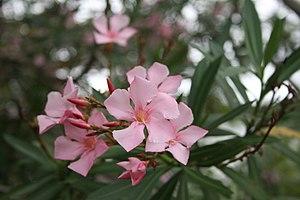 Flora de la Isla Sur-Nueva Zelanda06