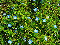 Flora of Rize.jpg