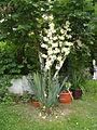 Flora vo Polog (8).JPG