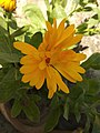 Flower 28 yellow.jpg