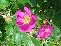 Flower dsc05302.jpg