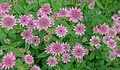 Flowers - Haddon Hall - Bakewell, Derbyshire, England - DSC02884.jpg