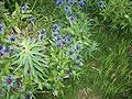 Flowers 27 June 2010 (1).JPG